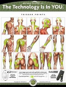 250 Best Images About Trigger Points And Pain Relief On Pinterest