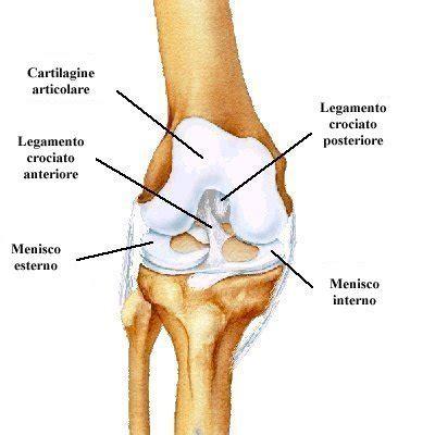 Lesione Corno Posteriore Menisco Interno Lesione Al Menisco Ecco Come La Fisioterapia Pu 242 Aiutarti