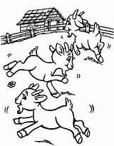 Coloring Goat Stay Farm Pasture Goats Toddler Crafts sketch template