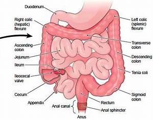 Gastrointestinal (GI) Tract | Physiology Plus