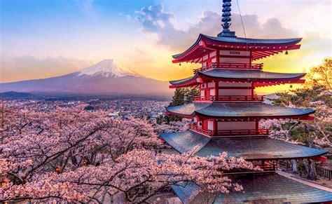 sakura blossoms  roche setting  soliris battle