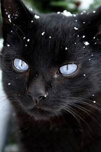 Blue-eyed black cat. | Cats and Kittens | Pinterest ...
