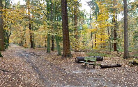 herfst  bos birkhoven ivn