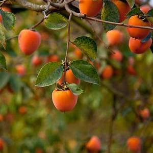 Arbre A Fruit : liste de fruits orange ooreka ~ Melissatoandfro.com Idées de Décoration