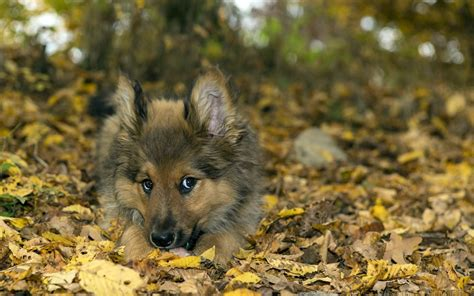 Autumn Animal Wallpaper - autumn animal wallpaper 65 images