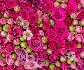 regalare fiori significato fiori
