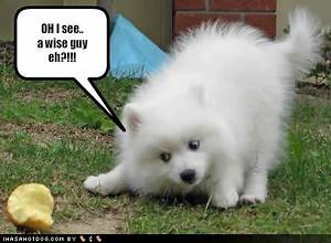 Funny dog pictures with quotes, funny dog picture, puppy ...