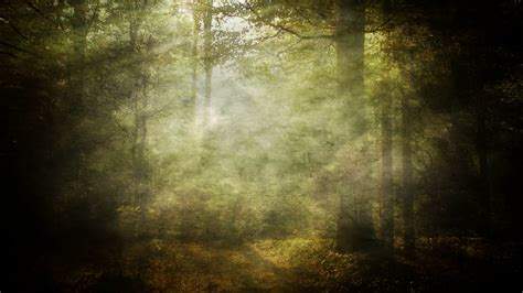 Backgrounds That Are by Magical Forest Background Loop Motion Background