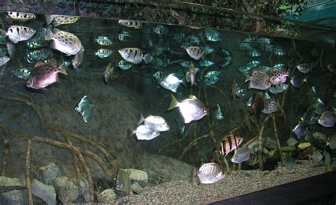 aquarium setup guide ph hardness temperature salt