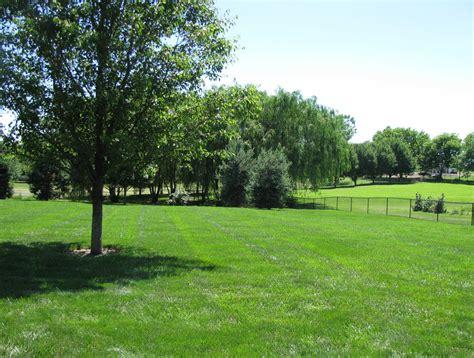 olive garden williamsburg va grass garden garden clipgoo
