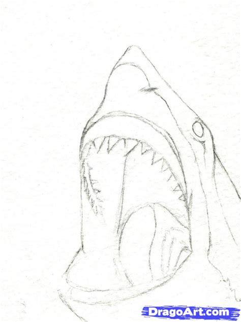 draw  shark head step  step realistic drawing
