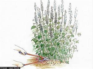 Comment Tailler Les Orchidées Pour Qu Elles Refleurissent : comment tailler ses fleurs pour qu 39 elles durent longtemps ~ Melissatoandfro.com Idées de Décoration