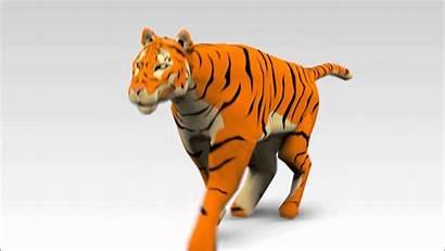 Tiger Animation 3d Running