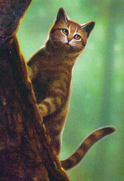 blattstern warrior cats wiki fandom powered  wikia
