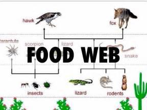 web cuisine ecosystems by ivan rangel