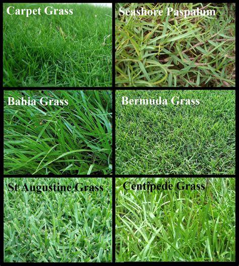 Types Of Grass For Orlando Lawn Irrigation Orlando