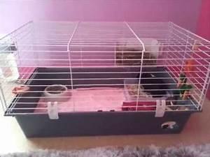 Cage A Cochon D Inde : l 39 am nagement de la cage de mon cochon d 39 inde youtube ~ Dallasstarsshop.com Idées de Décoration