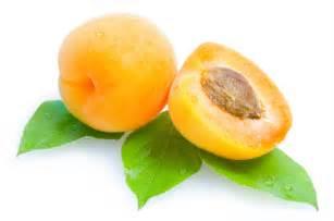 girl photo album apricot fruit photos elsoar