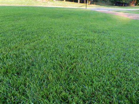 Zoysia Grass Texas Shade