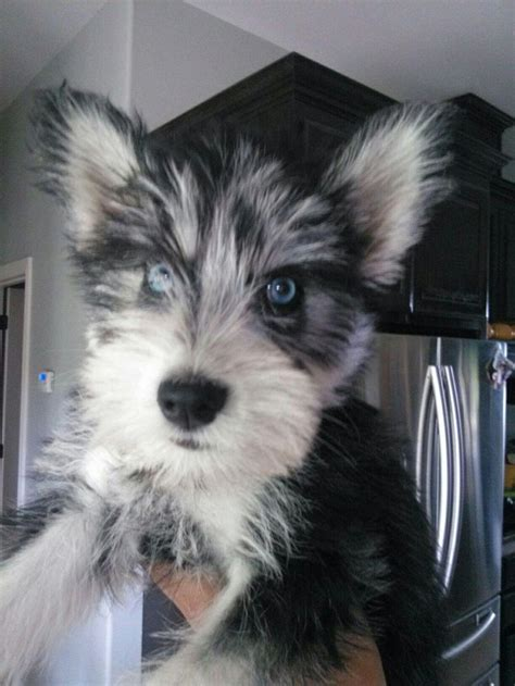 unreal husky cross breeds
