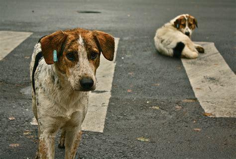 Street  Ee  Dog Ee