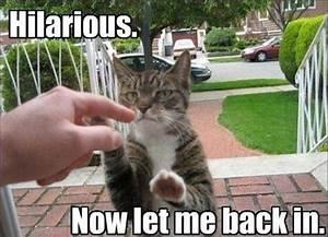 30 funny animal captions - part 2 (30 pics) | Amazing ...