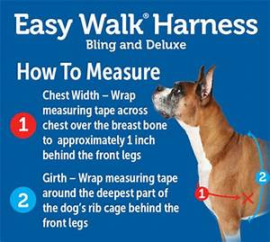 Easy Walk Harness For Dogs Instructions Easy Dog Harness ...