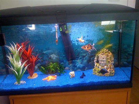 aquarium photos d aquarium page 34 animalerie en ligne accessoires et alimentation