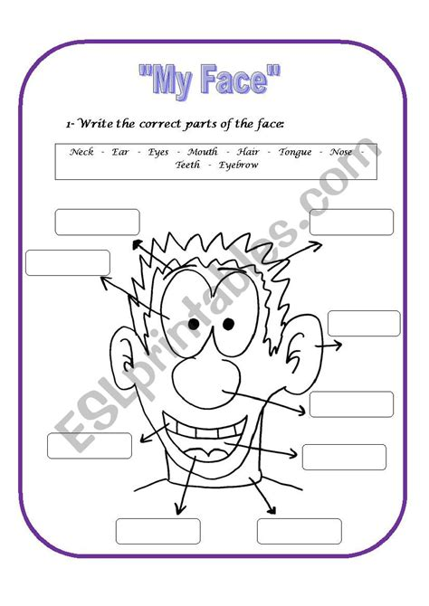 Parts Of The Face  Esl Worksheet By Agnetha