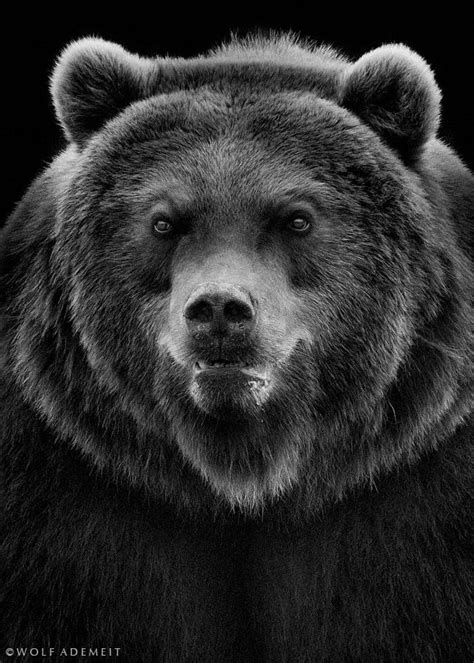 Photo the angry bear by Wolf Ademeit on 500px | Angry bear, Bear tattoos, Bear images