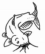 Catfish Coloring Channel Pages Drawing Clipart Fish Bluegill Getdrawings Printable State Template Female Sketch Getcolorings Webstockreview sketch template