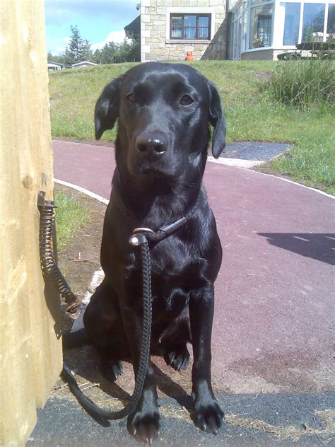 Study: Black dogs don't get adopted as often as dogs with ...