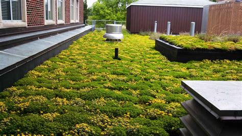 eco green roof eco roofs green roof systems