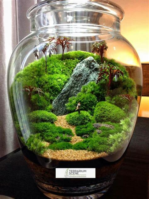 terrarium ideas  pinterest diy terrarium
