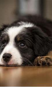 Free download Cool Animals Dog Desktop Images HD Dog ...