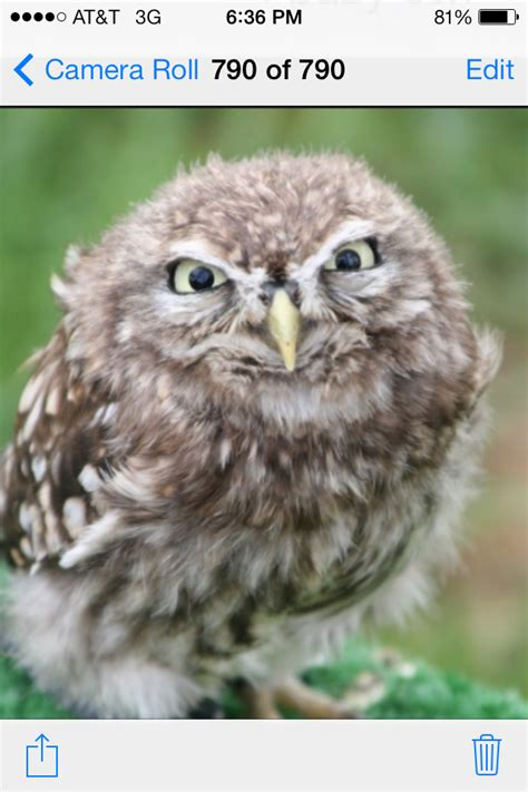That annoying moment when you take a selfie, and your hair looks perfect but your face expression looks. Coffee, I need coffee | Funny owls