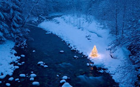 Snow Lights by Washington Fragments
