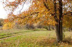Laubbaum Mit Roten Blättern : ulme archivbilder abgabe des download 5 987 geben fotos frei ~ Frokenaadalensverden.com Haus und Dekorationen
