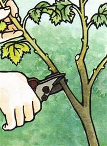 Erdbeeren Ableger Entfernen : gartenschlumpf weichobst im eigenen garten ernten und anbauen ~ Frokenaadalensverden.com Haus und Dekorationen