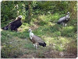 Tierpark Bad Mergentheim : unter geiern und w lfen im tierpark bad mergentheim ~ Watch28wear.com Haus und Dekorationen