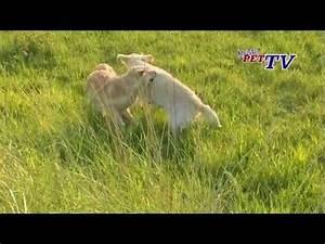 Wie Alt Werden Golden Retriever : golden retriever der vielleicht beliebteste hund im portrait ~ Eleganceandgraceweddings.com Haus und Dekorationen