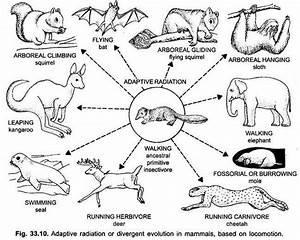 Adaptive Radiation In Mammals