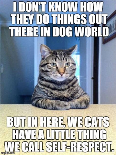seat cat meme imgflip