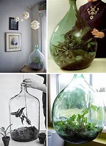 Terrarium Plante Deco : dame jeanne terrarium elephantintheroom we have a huge bottle now pinterest plantes idee ~ Preciouscoupons.com Idées de Décoration