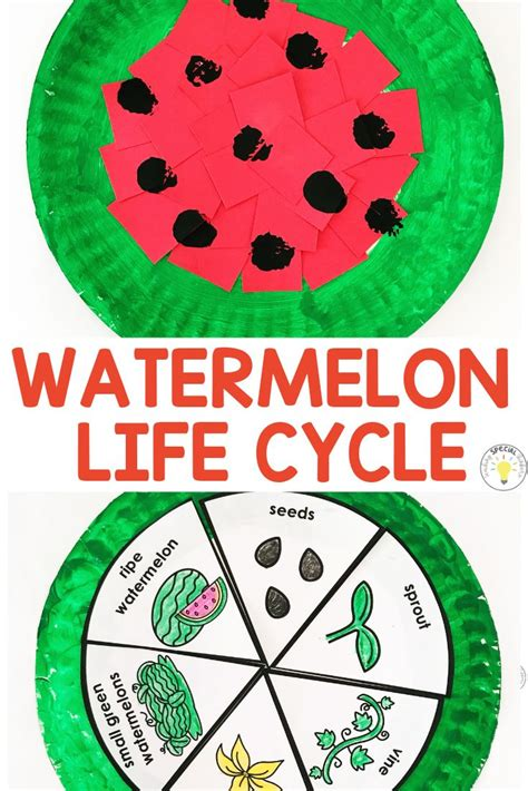 watermelon week    year activities teaching