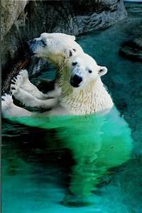 Polar bears! :D | Marine life