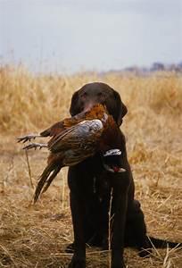 Ringneck Festival & Bird Dog Challenge
