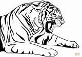 Tiger Tigre Coloriage Coloring Ausmalbilder Malvorlage Zum Ausmalbild Ausdrucken Kostenlos Colorare Gratuit Colorir Ausmalen Printable Desenho Club Sabertooth Animal Disegni sketch template