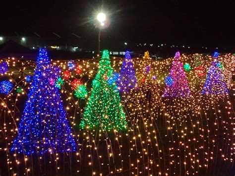 look magical field of lights in nuvali is the