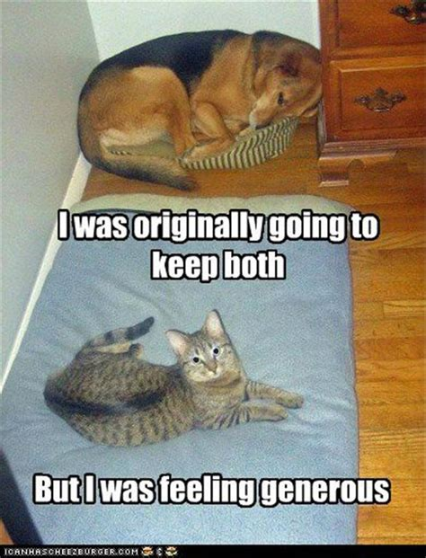 Cat Takes Dog Bed, Funny Cat Pictures  Dump A Day